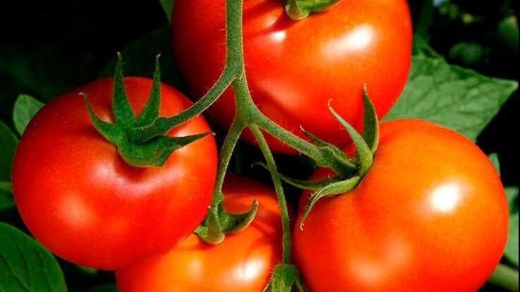 Tomato - Celebrity