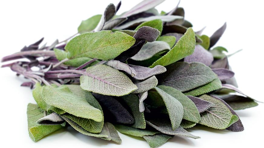 Sage- Purple