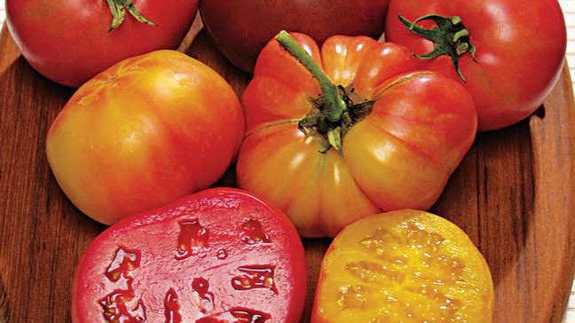 Tomato- Rainbow Blend
