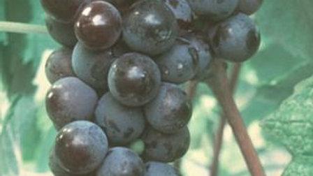 Grape- Valiant