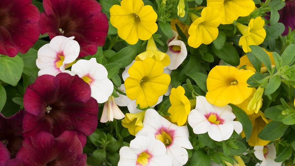 Combo - Confetti Garden Ruby Slippers