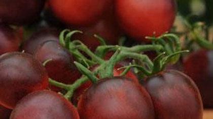 Tomato- Indigo Ruby