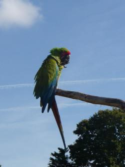 zoo de Branféré