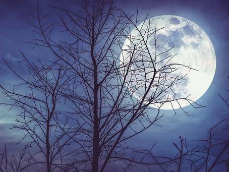 Pleine Lune Du 30 Novembre 2020 Emotions Assurées