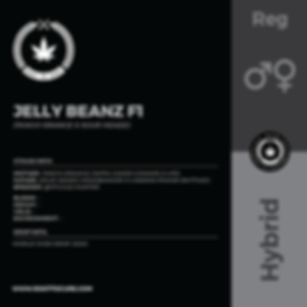JELLY BEANZ F1-01.png