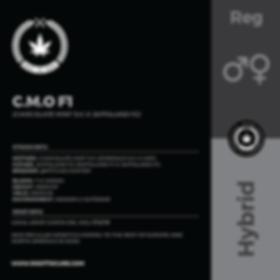 C.M.O F1-01.png