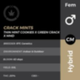 CRACK MINTS FEM HOVER NAIL-01.png