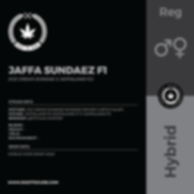 JAFFA SUNDAEZ F1-01.png