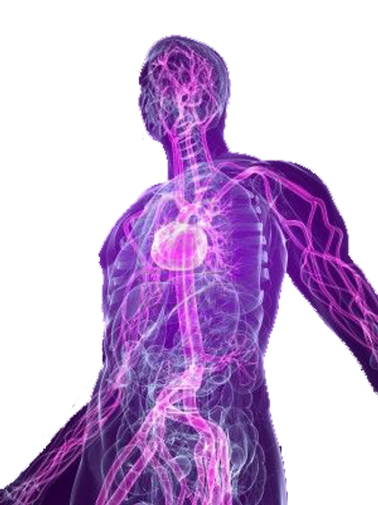 4683186-transparent-human-body-with-high