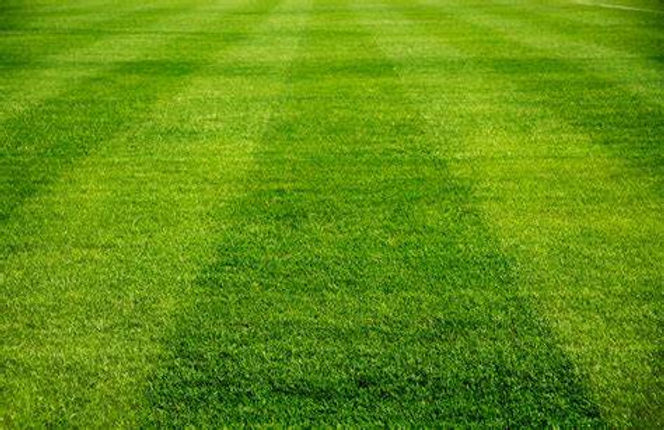soccerfield stripes.jpeg