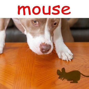mouse .jpg