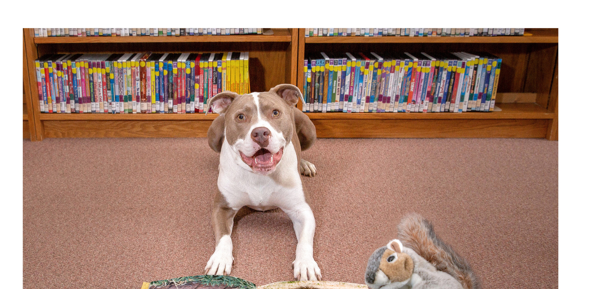 Jazzy Explores The Library page 3.jpg