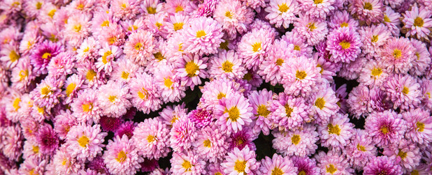 Bunches of Pink