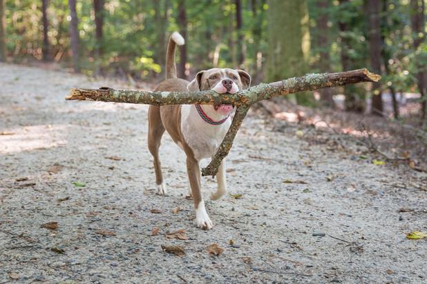 I luvs me some sticks!