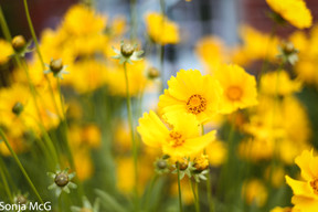 Yellow brightens the day