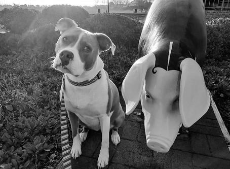 Jazzy - Pig