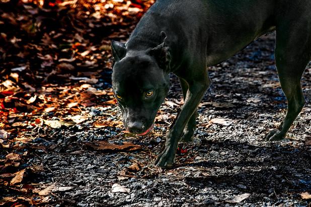 Evie, a sweet dog