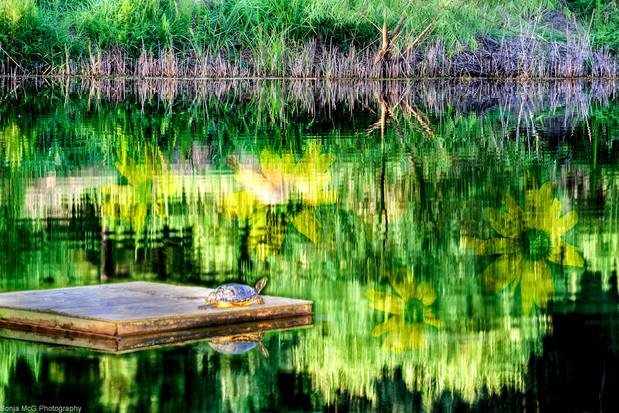 A whimsical water scene