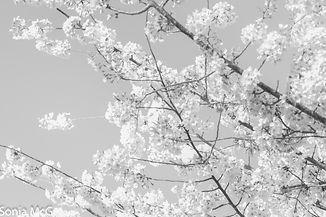 Covid-19 spring walk 3-2020 (3).jpg
