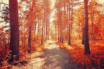 Acupuncture Autumn Metal.jpg