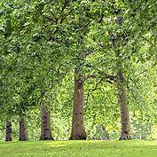 Los árboles del parque