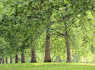 공원의 나무