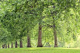 Park Trees