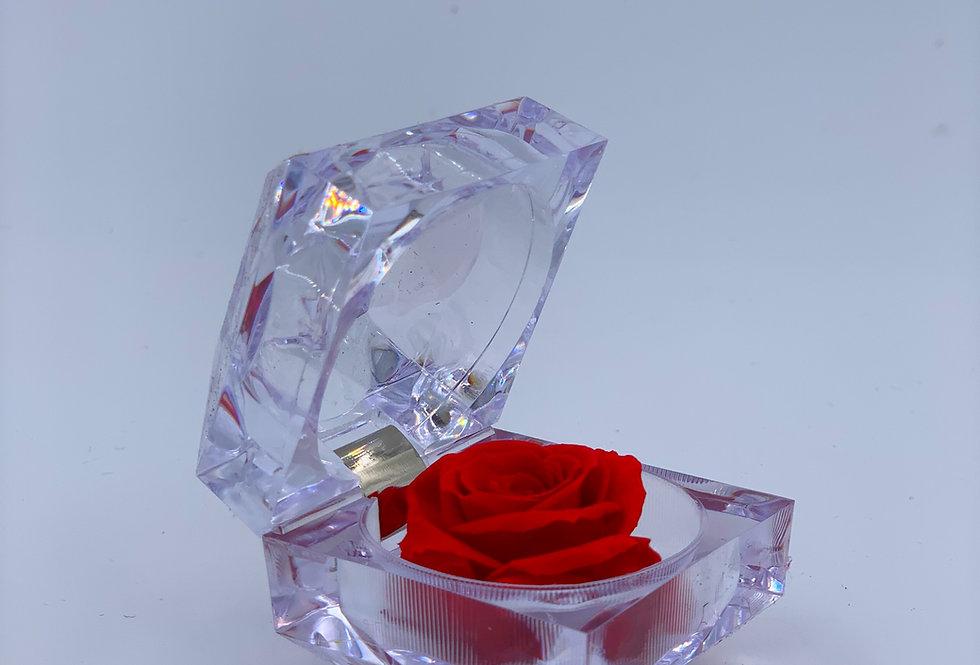 Infinity Rose mini
