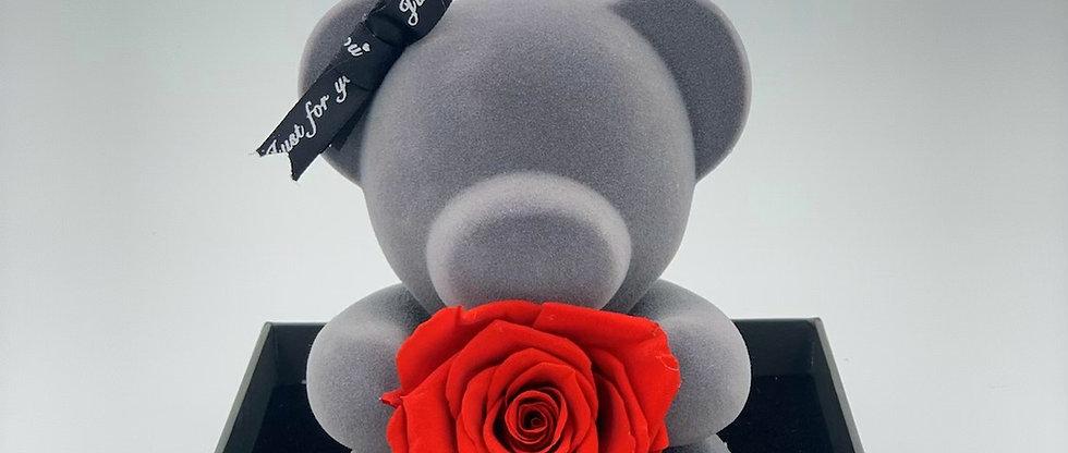 Samt Bär mit echter infinity Rose