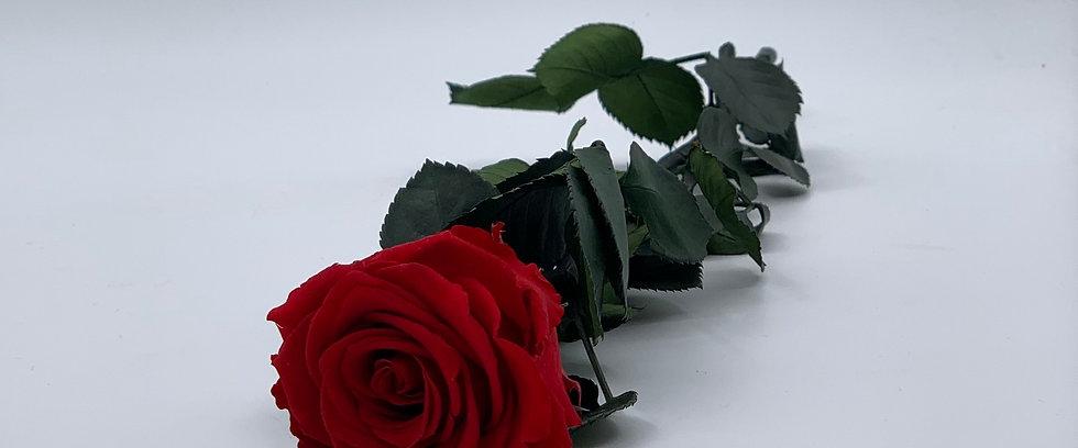 3-Jahre haltbar Echte Rose mit Stiel 52cm Rot