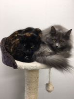 TWINKIE AND LILY