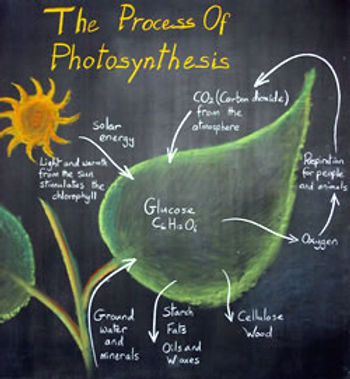 photosynthesis.jpg