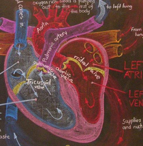 Heart cycle.jpg