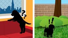 Cães em apartamento: é possível uma boa convivência?
