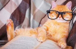 gato estudando.png