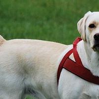 Dog Walker em Campinas