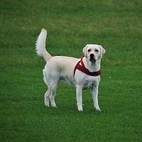 Passeador de Cães em Campinas