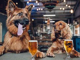 Cervejaria dá 'licença-cachorro' para funcionários que adotarem um filhote