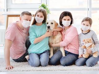 Cães farejadores serão treinados para detectar coronavírus.