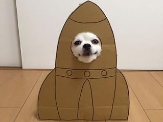 Japonesa cria cosplays engraçados com papelão para seu cachorro. O resultado é muito engraçado.