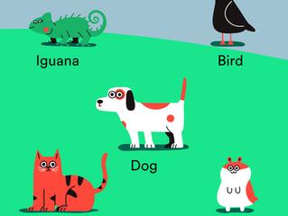 Spotify para pets.