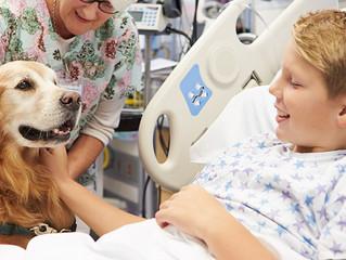 Permissão da entrada de animais de estimação em hospitais avança na Alesc