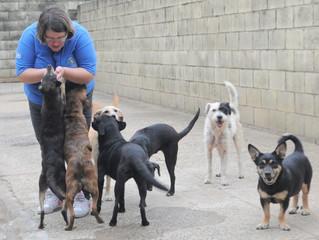 Campinas terá 'Samu' para animais acidentados