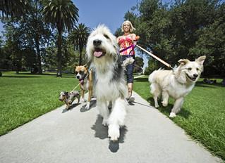 Seu cachorro está te levando para passear? Veja algumas dicas para mudar esse comportamento!