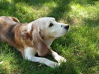 Dog Walker Campinas