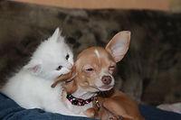 Babá de Cães e Gatos Campinas