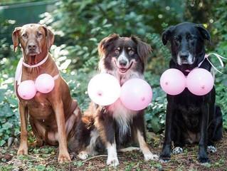 Outubro Rosa Pet alerta para o câncer de mama em animais.