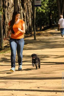 Cão Passeador