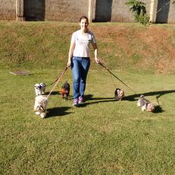 Cão Passeador - Passeios Recreativos