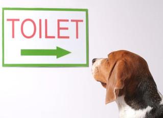 Seu cachorro não consegue fazer as necessidades dentro de casa? Veja algumas dicas para alterar esse